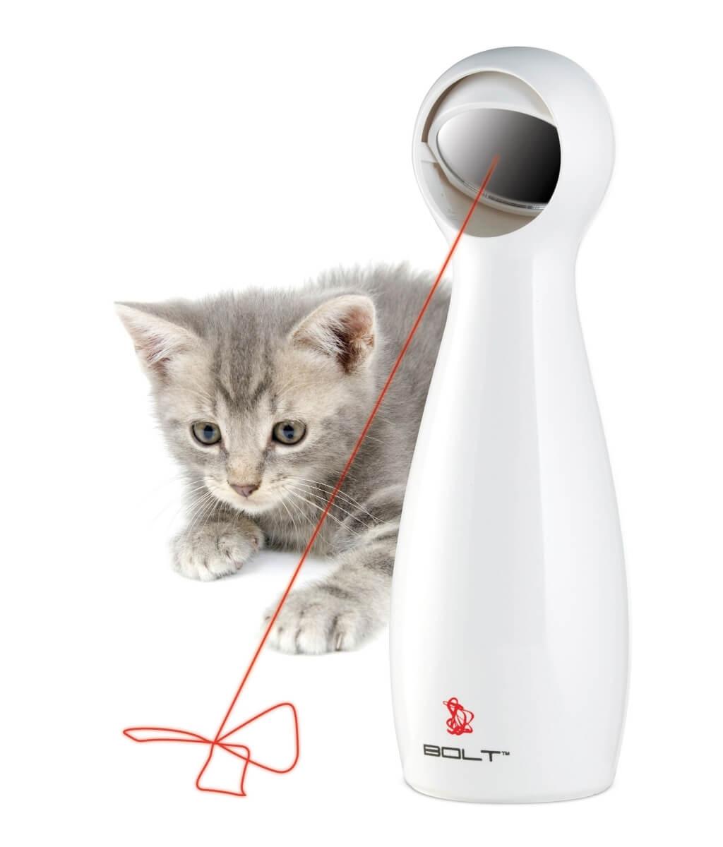 Chat jouant avec laser