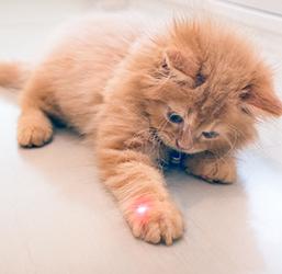 Jeu laser pour chat