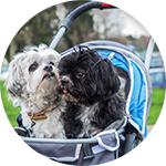 2 chiens dans une poussette