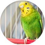 Perroquet dans une cage