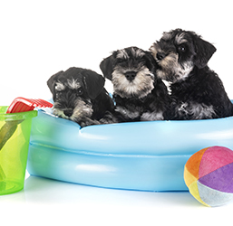 Cachorritos en su piscina