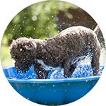 Piscina de plástico para perros