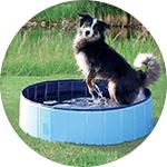 Piscina azul para perros