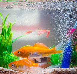 Système Co2 dans aquarium