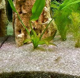 Sable pour aquarium