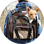 Sac à dos pour transporter chien