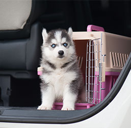 Chien cage de transport