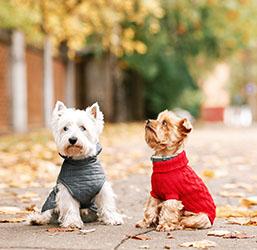 Vêtements chien