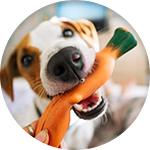 Jouet souple carotte pour chien