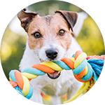 Jouet corde à lancer pour chien