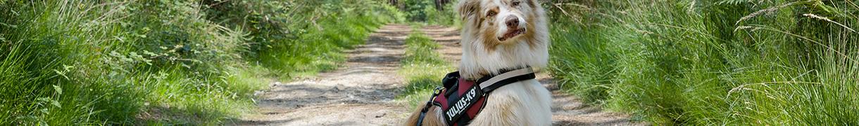 Pour l éducation de votre chien, afin de le promeneren toute sécurité ou  encore pour la pratique de sport, harnais, laisse et collier sont des  accessoires ... b45f8e869db0