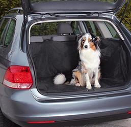 Transport voiture pour chien