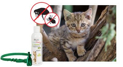 anti puces chat et chaton produits antiparasitaires pour chat. Black Bedroom Furniture Sets. Home Design Ideas