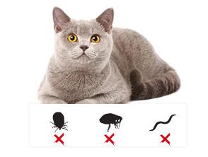 anti puces chat produits antiparasitaires pour chat. Black Bedroom Furniture Sets. Home Design Ideas