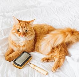 Pelage du chat
