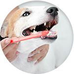 soins des dents chien