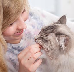 friandise offerte à un chat