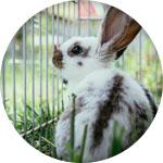 lapin extérieur cage