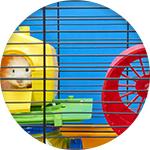 Hamster nain dans cage