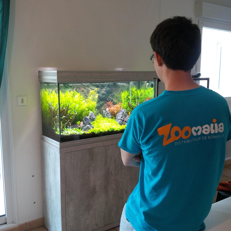 benjamin zoomalia aquarium