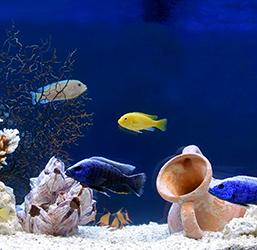 Aquarium avec poissons exotiques