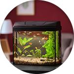 Petit aquarium pour débuter