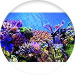Poster de décoration pour aquarium