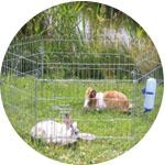 Enclos extérieur lapin