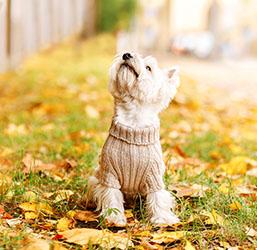 Chien balade automne