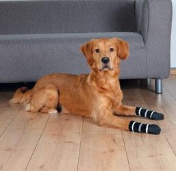 Chaussettes chien