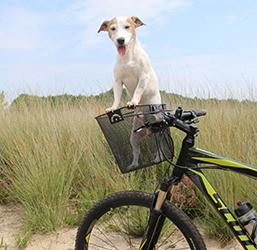 Panier de transport pour chien sur vélo
