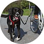 Kit de transport vélo pour chien