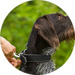 Collier sur un chien