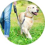 Laisse chien pour promenade