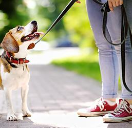 Laisse pour chien