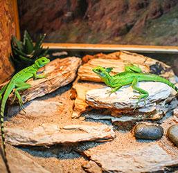 Reptiles dans leur terrarium