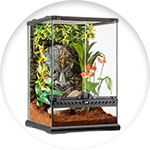 Terrarium tropical tiki