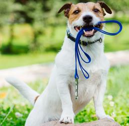 Laisse en nylon pour chien
