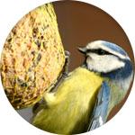 boule de graisse oiseaux