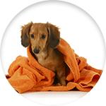 Shampoing sec pour chien