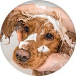Shampoing anti odeur chien