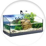 Aquaterrarium exotique