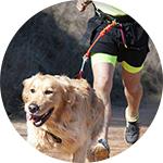 Laisse de sport pour chien