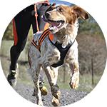 Harnais sport pour chien