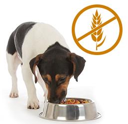 Croquettes chien sans céréales