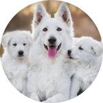 age chien