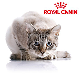 Croquettes royal canin chat