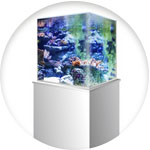Aquarium design carré
