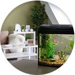 aquarium intérieur maison