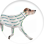 Fonctionnement collier anti parasitaire chien